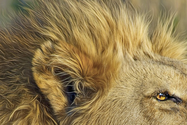 """Realitätscheck: Wie realitätsnah ist """"Die Höhle der Löwen"""" wirklich?"""