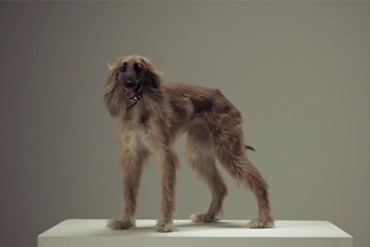 Digital-PR: Muuns schlauer Marketing-Stunt mit Windhunden